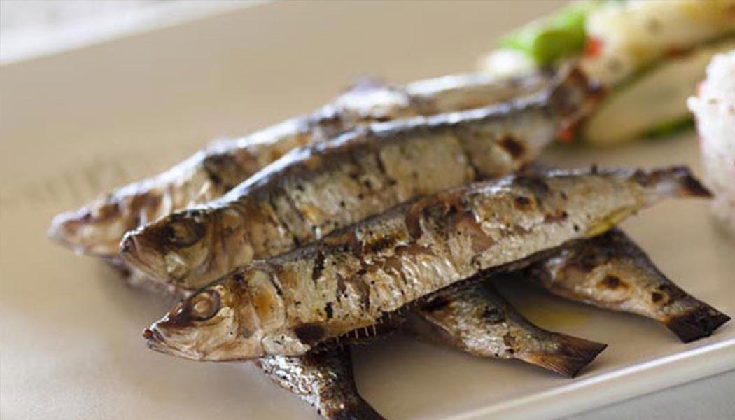 sardine new